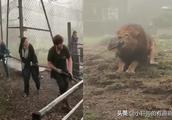 英格兰动物园因给予游客与狮子进行拔河的机会而受到谴责