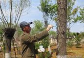 果树愈合剂在防止果树修剪腐烂病上面的应用