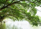 影响枝梢生长的因素有哪些?