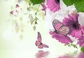 词话|蝴蝶落叶漾寒水,求赐下联
