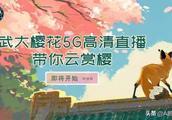 武汉大学樱花5G直播是真的吗?