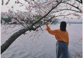 颐和园西堤  山桃花开 春意浓