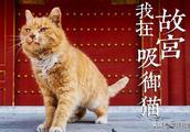 """故宫网红御猫""""小崽儿""""悄然离世,关于故宫的它们你可知道?"""