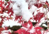 杭州,只为看一眼,大雪纷飞的灵隐寺