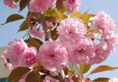 走过宁县二中校园的春夏秋冬