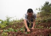 80后上山种菜五年,一年不及过去一个月工资,每天变着花样做美食