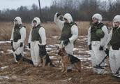 退役后不准贩卖宰杀;俄罗斯工兵出动军犬执行一特殊任务,效果好