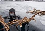 挪威帝王蟹泛滥,现在卖到中国,价格却在欺负人,吃货怒了:不吃