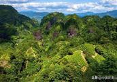 大美! 武夷山有机生态茶园春意盎然