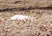 残疾老人一觉醒来,狗不见了到处寻找,原来狗是怕死在家里
