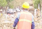 百年大树被砍,市民直呼太可惜,绿化回应有安全隐患