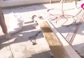 小区住户借装修名义违规搭露台,两个月发现7户,需立即拆除!