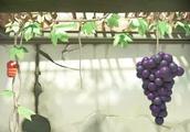 爆笑虫子:小红小黄爬上葡萄藤,两虫终于吃到葡萄,小黑想分杯羹