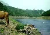 男的在河里游泳,女子把衣服放牛车上也下河游泳,结果牛车跑了