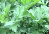 还是喜欢自家周围的花花草草以及正在结麦穗的小麦苗