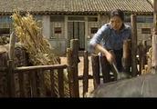 大宝二宝牵牛,宝柱与香草吵架,宝柱跑到爹的屋里睡觉