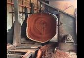 重达8吨的千年红木,至今无人敢开,切开后真是让人后悔!