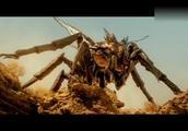 史上最大的蚂蚁,超出您的想想!