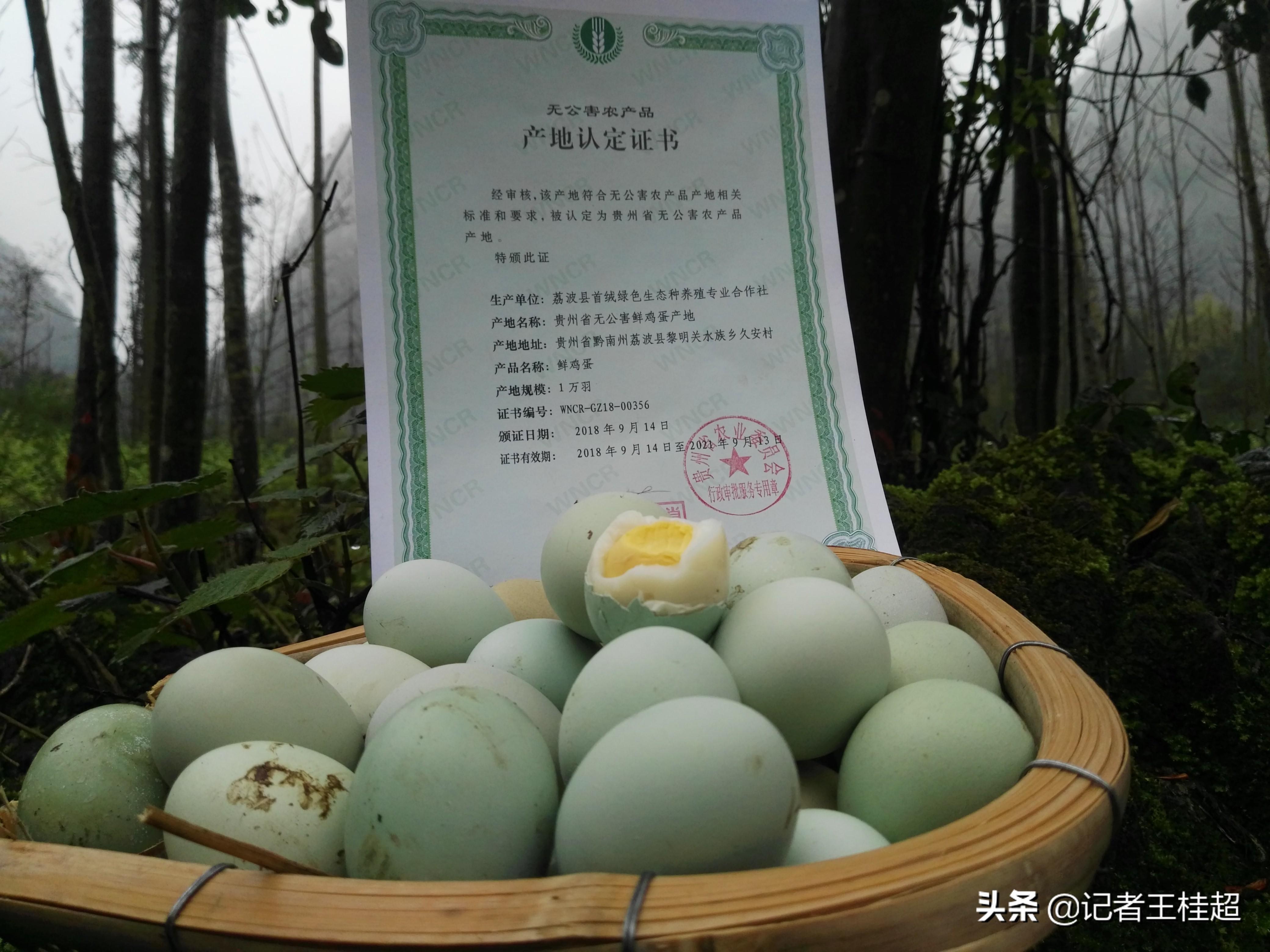 #山货上头条#【今日扶贫产品推荐:乌鸡蛋】