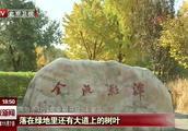 """11月7日立冬:公园秋叶延扫 """"落英""""美景再持续两周"""