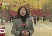 """11月7日立冬:公园秋叶延扫""""落英""""美景再持续两周"""