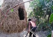 生存哥在树干上挂了一个窝,还造有天梯,这也太安全了吧