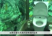 """日本""""水族馆女厕""""成网红,感受如厕时被几百条鱼围观"""