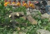 泉州中山公园:树干突然开裂,树枝一侧倒下,树底下还有两个人