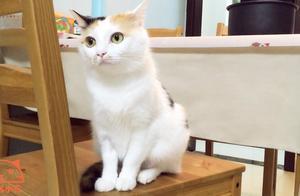 猫咪:不想动,就是不想动,喵~