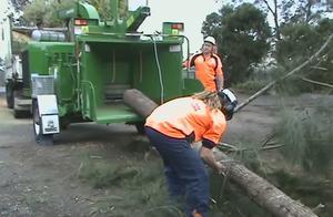 树干砍断处理,这车真牛啊,一段树木全给粉碎成沫了