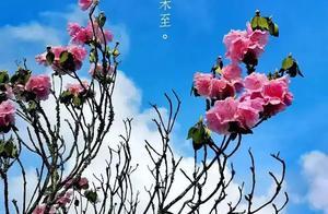 神农架迎来高山花海,杜鹃花开梦幻森林的后花园,简直不要太美!