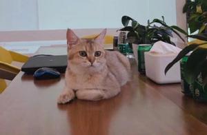 贾乃亮公司大老板出面辟谣,童乐公司总裁晒猫咪照:散了吧