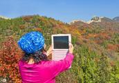 又见秋叶红,一起来领略秋天的北京八达岭国家森林公园