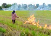 农民对秸秆处理难选,罚款,偷烧,虫害,肥力,到底怎么办?
