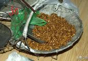 你上当没?20块钱一斤的松籽,居然都是空壳!哈尔滨松花江街附近这些人卖的松籽,收时才几块钱一袋子!