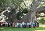 """世界最""""可怜""""的树,至今已经存活6000年,直径21米树干容纳40人"""
