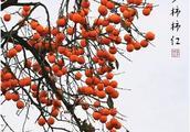 初冬的街子古镇有一种美,叫柿子红了