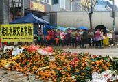 广西桂林,与蜜桔大丰收形成鲜明对比的,是0.25元/斤的收购价