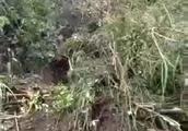 2月20日下午两点上林三里黄楚村杨京庄山石滚落,幸亏无人伤亡